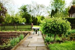 Ochrona przed szkodnikami działki ogrody